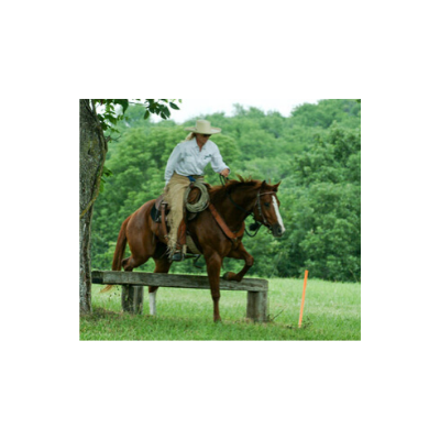 trail obstacles horse confidence