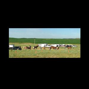 horsemanship clinic pasture